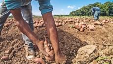 farm_work_1170-770x460