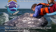 Whale-Protector-Project-Image
