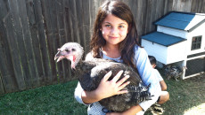 Author's daughter, Norah, holds Gravy the turkey (who thinks it's a hen)